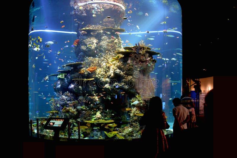 Toeristen bij S e A Aquarium, Singapore stock afbeelding