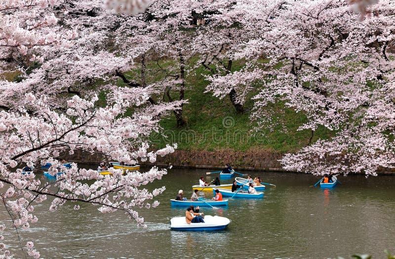 Toeristen die boten op een meer roeien onder de mooie bomen van de kersenbloesem in het Stedelijke Park van Chidorigafuchi tijden royalty-vrije stock afbeelding