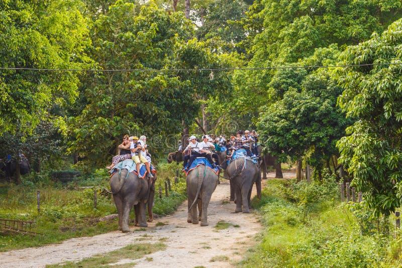 Toeristen die de wildernis op de ruggen van olifanten bezoeken royalty-vrije stock fotografie