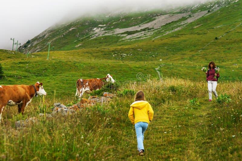 Toeristen die dichtbij het weiland met koeien in Alpen lopen stock afbeelding