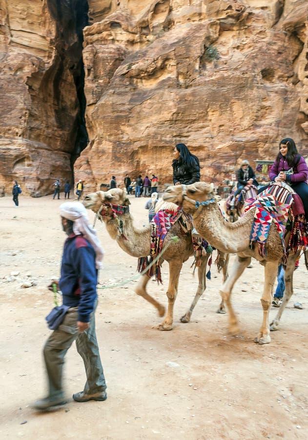 Toeristen die een kameel berijden stock afbeeldingen
