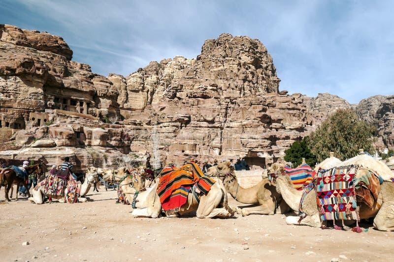 Toeristen die een kameel berijden stock foto