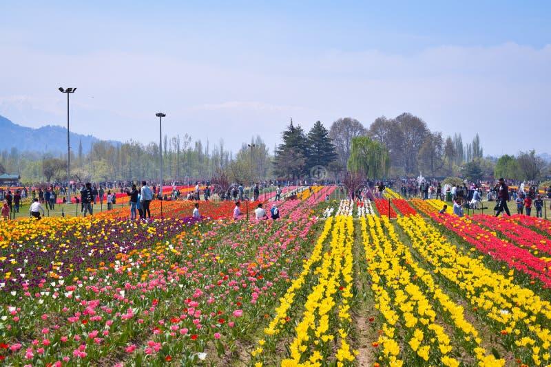 Toeristen die en van foto's in asia' genieten nemen; s grootste tulpentuin Srinagar, Kashmir, India stock afbeeldingen