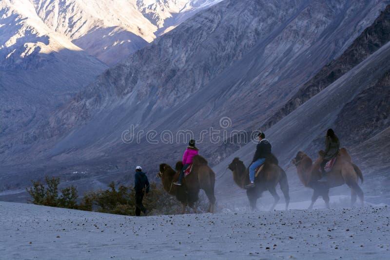 Toeristen die kameel berijden bij woestijn stock fotografie