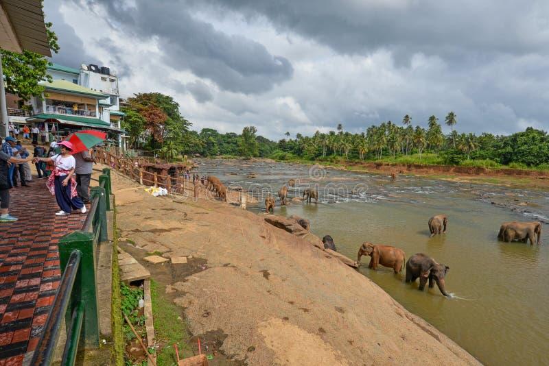 Toeristen die olifanten bekijken die in een rivier, Sri Lanka baden royalty-vrije stock foto's