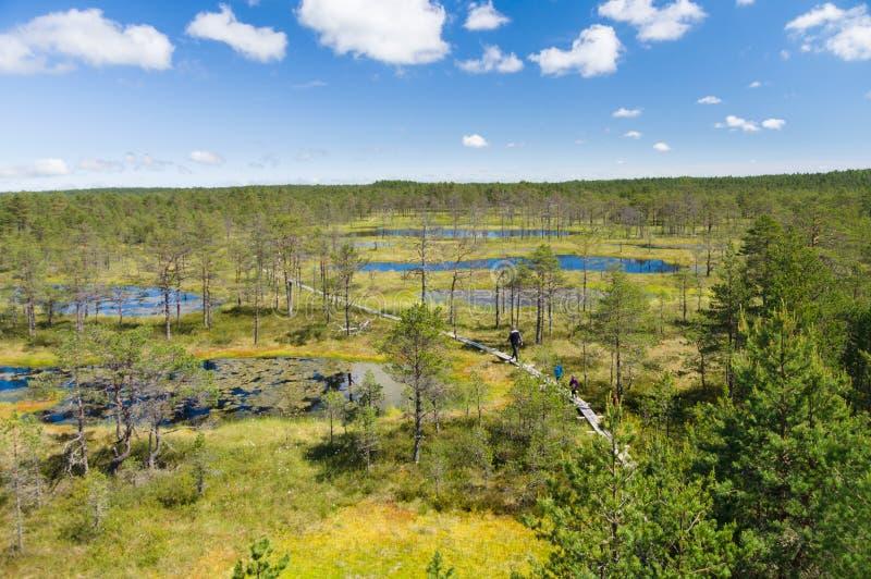 Toeristen die op wandelingssleep door moerasland lopen stock afbeelding