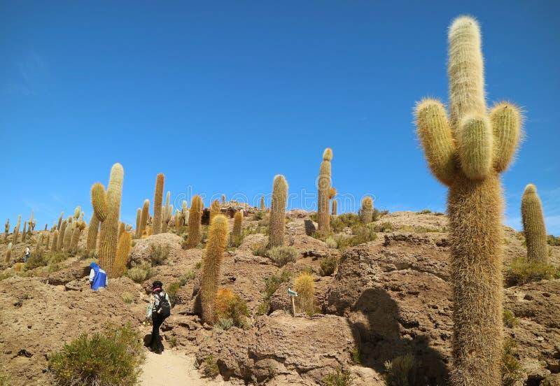 Toeristen die Reuzetrichocereus-Cactusgebied op Isla Incahuasi Isla del Pescado, Rocky Outcrop in het midden van Uyuni onderzoeke stock foto