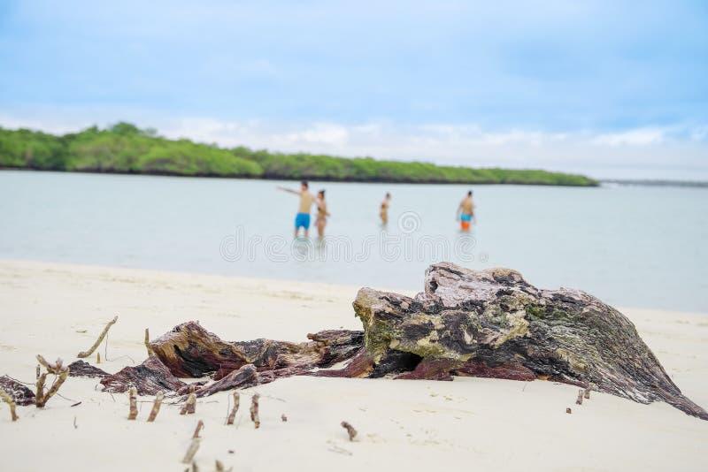 Toeristen die van de tijd genieten binnen bij mooi zandig strand van Tortuga-Baai in Santa Cruz, de Eilanden van de Galapagos stock afbeelding