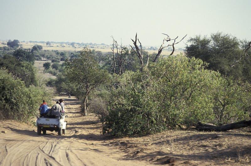 Toeristen in een jeep op een Afrikaanse safari, Botswana stock foto