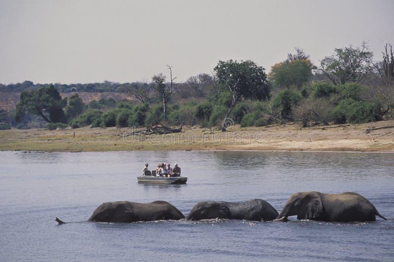 Toeristen op een boot die op Afrikaanse olifanten letten kruisend een rivier royalty-vrije stock afbeelding