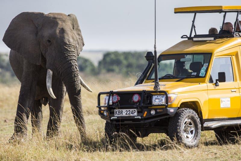 Toeristen op een safari in een speciaal voertuig die op een olifant letten stock afbeeldingen