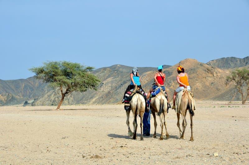 Toeristen op kameel