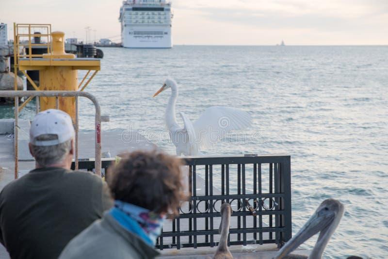 Toeristen op Mallory Square van Key West royalty-vrije stock afbeeldingen