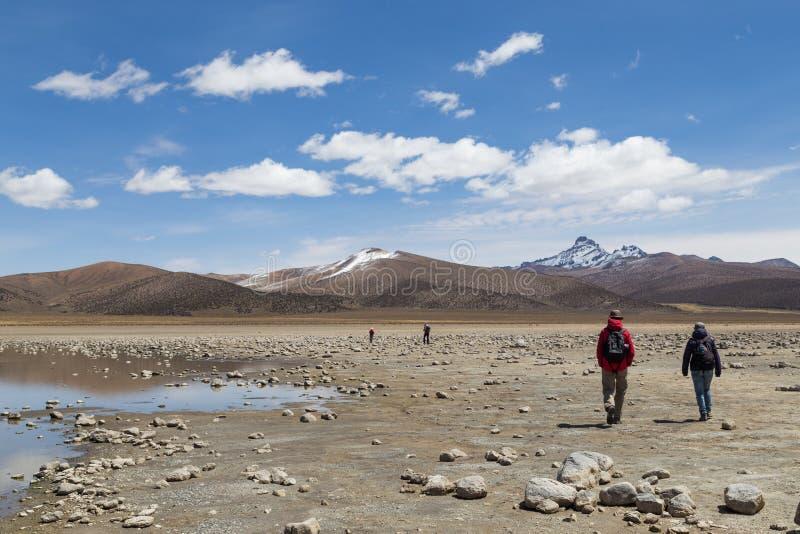Toeristen in Sajama Nationaal Park, Bolivië stock foto's