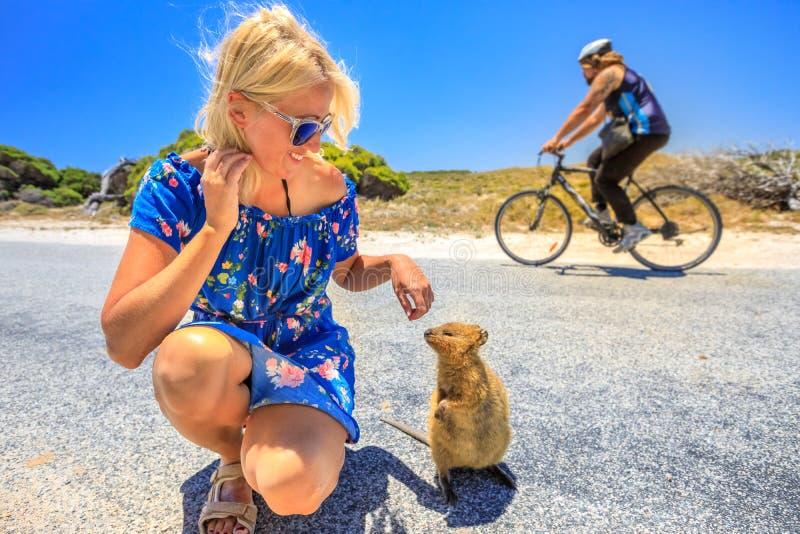 Toeristenvrouw met Quokka royalty-vrije stock afbeelding