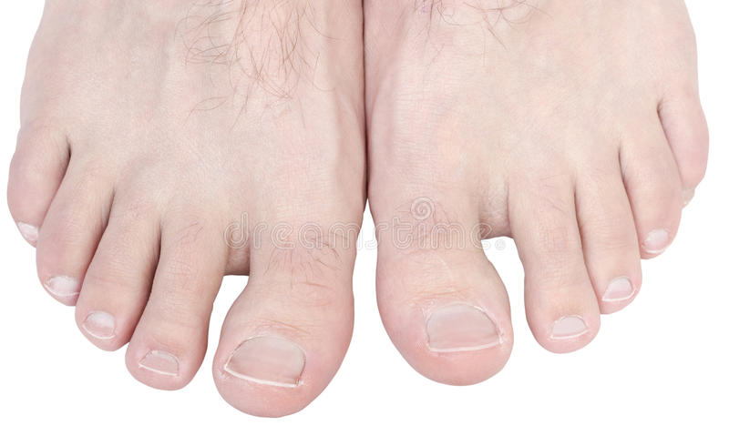 Toes. Caucasian male toes isolated on white background royalty free stock photos