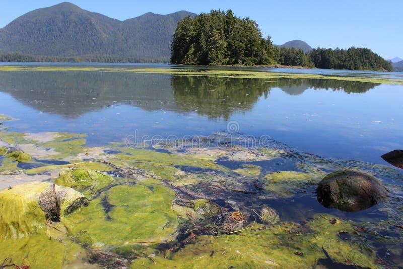 Tofino, BC - jardins botânicos fotografia de stock royalty free