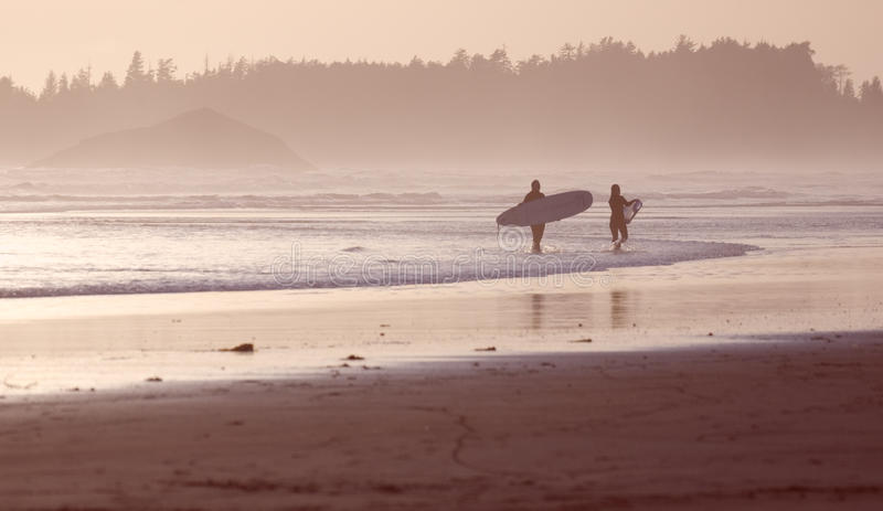 Tofino surfers at sunset royalty free stock photos