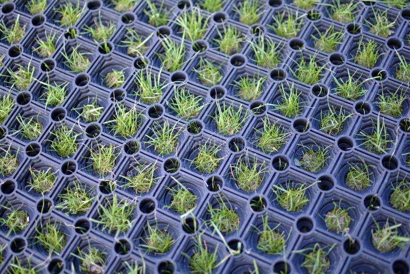Tofsar av gräs som växer till och med plattformen för golfutslagsplats royaltyfria foton