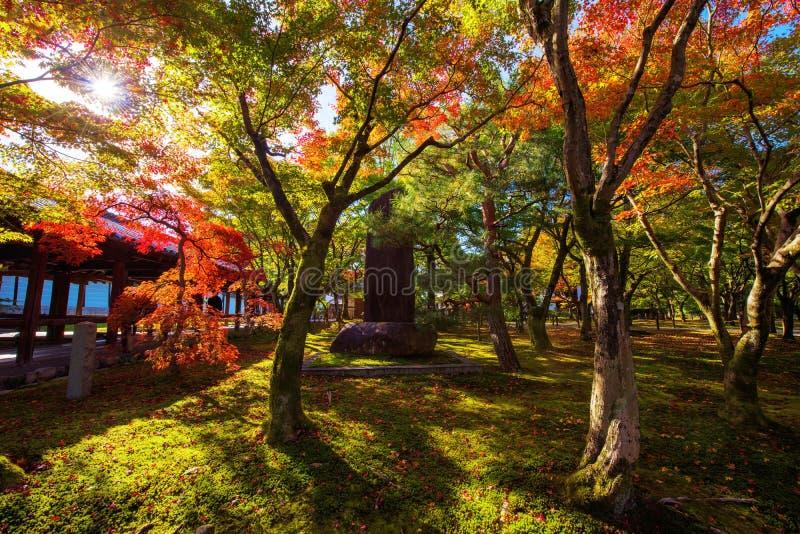 Tofuku籍有秋天叶子的,京都寺庙庭院 库存图片