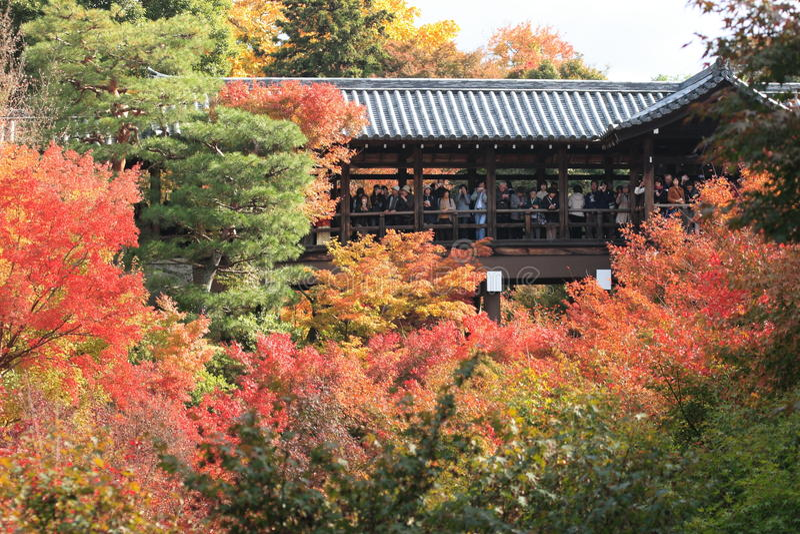 Tofukuji Tempel im Herbst, Japan stockfotografie