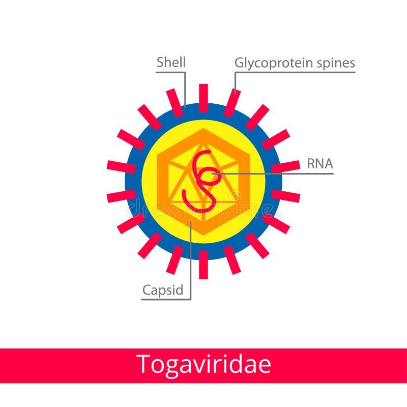 Togaviridae Ταξινόμηση των ιών διανυσματική απεικόνιση