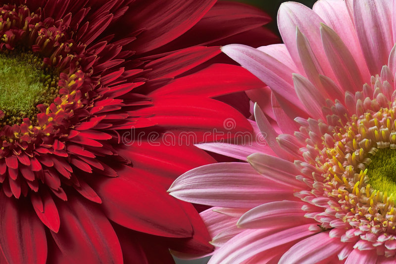 Download Together stock photo. Image of present, shine, petal, light - 192410