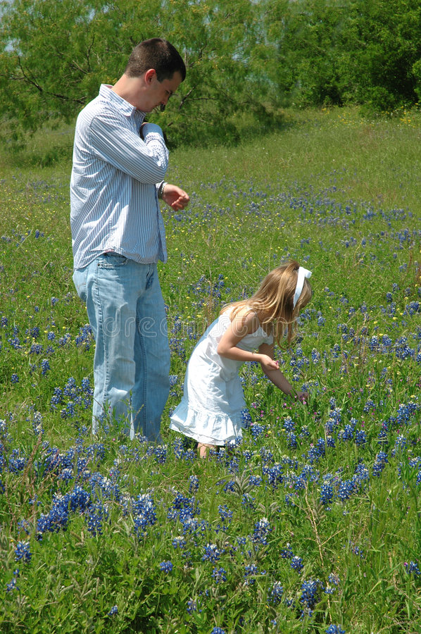 Together. A father and child pick flowers in a field of blue bonnet flowers stock images