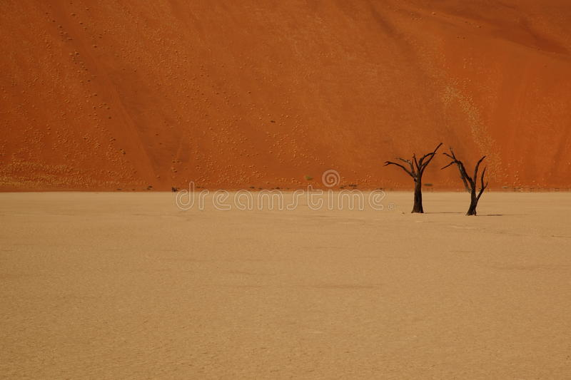 Download Together alone stock photo. Image of namib, arid, africa - 28305014