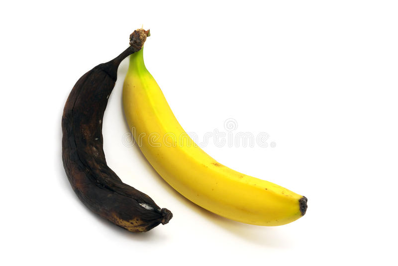 Together rotten and ripe bananas. Rotten and fresh bananas. Element of design stock photo