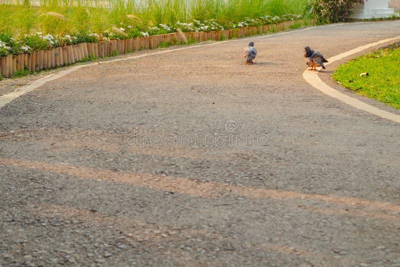 Togethere в реальном маштабе времени birdsgray голубя 2 как пары стоковые фотографии rf