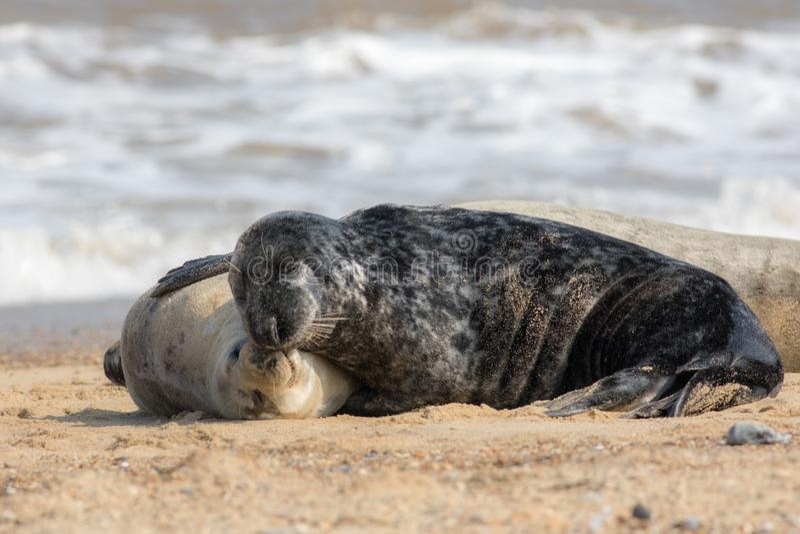 togetherness Animali nell'amore che stringono a sé Abbracciare affettuoso delle guarnizioni fotografia stock libera da diritti