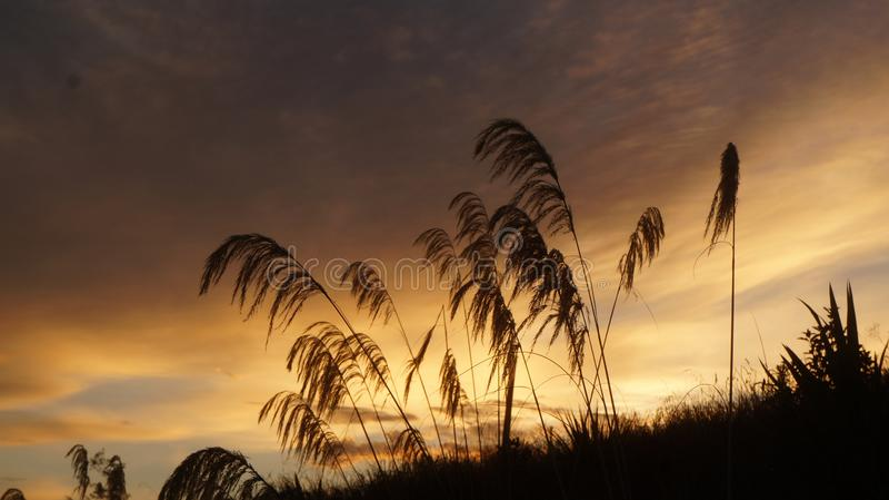 Toi Toi som växer vid den Waikato floden arkivfoto