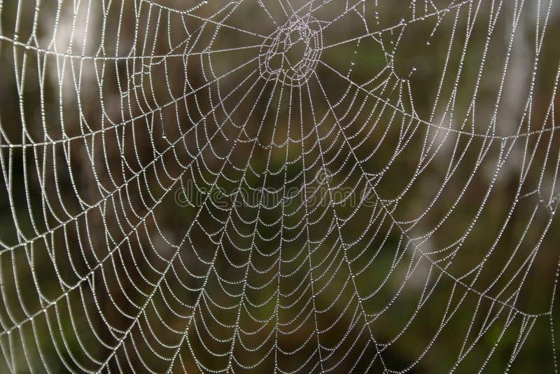 Toile d'araignée à jour dans les gouttes de rosée photographie stock