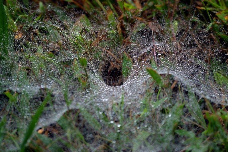 Toile d'araignée image libre de droits