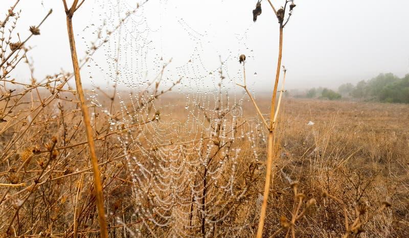 Toile d'araignée photos libres de droits