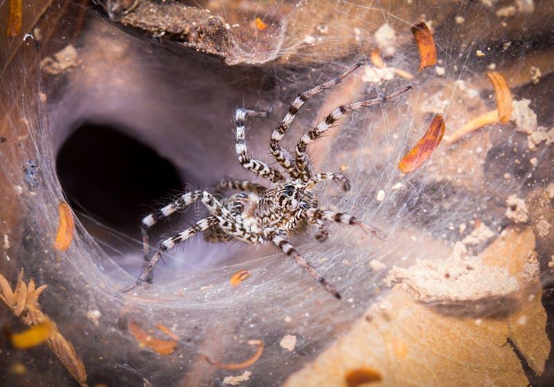 Toile d'araignée avec l'araignée noire et blanche dans la forêt photographie stock libre de droits