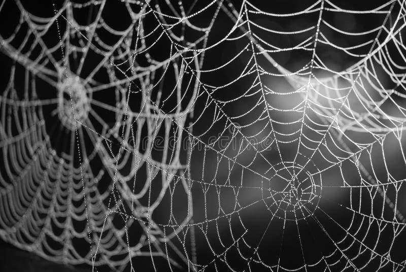 Toile d'araignée avec la rosée photographie stock