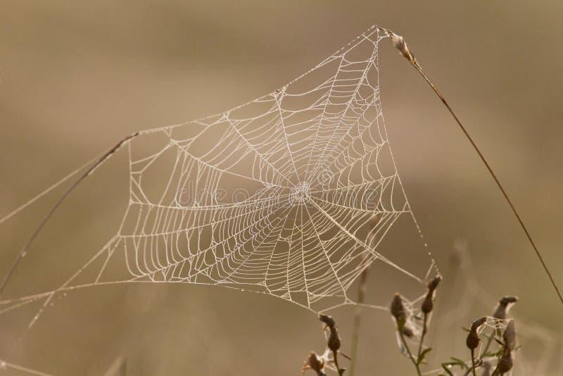 Toile d'araignée complètement des baisses de rosée photo libre de droits