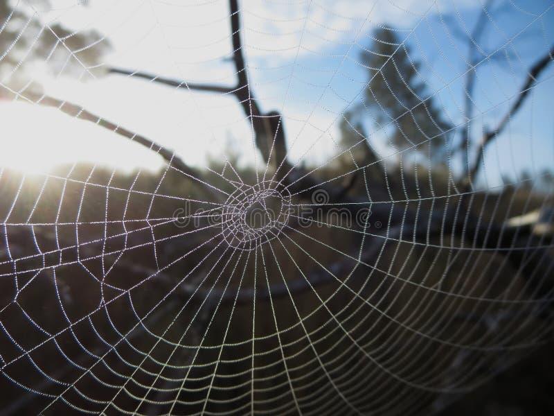 Toile d'araignée couverte dans des gouttelettes de brouillard au soleil photos libres de droits