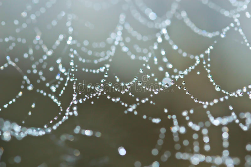 Toile d'araignée couverte de baisses de rosée de pétillement photographie stock libre de droits