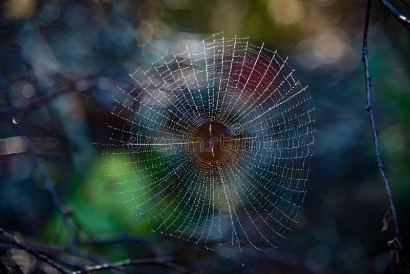 Toile d'araignée couverte de rosée dans une forêt en Suède photographie stock