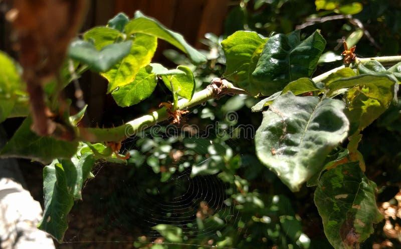 Toile d'araignée dans la brosse photographie stock
