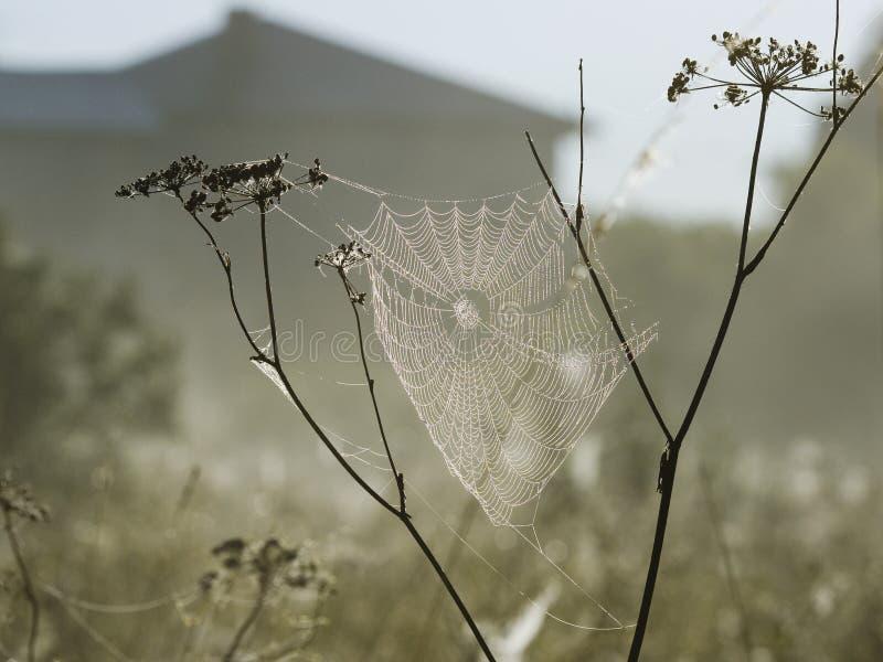 Toile d'araignée dans le matin brumeux photo libre de droits