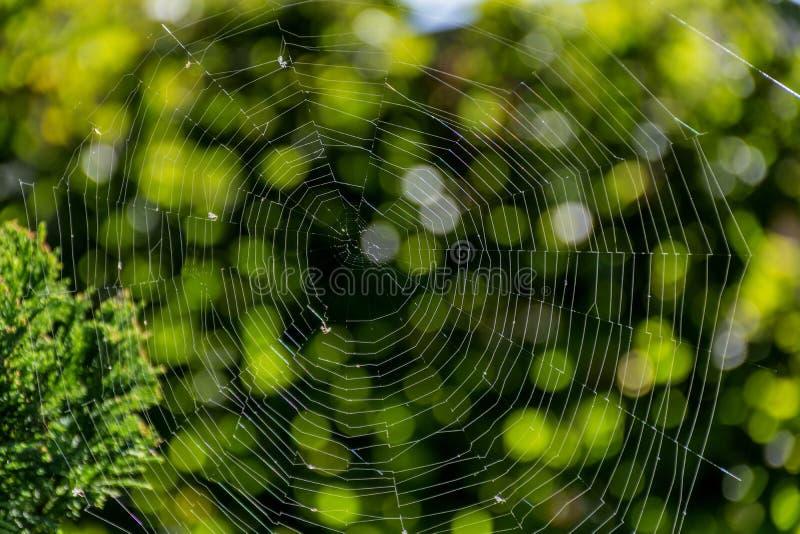 Toile d'araignée dans les rayons du soleil avec le fond naturel vert images libres de droits
