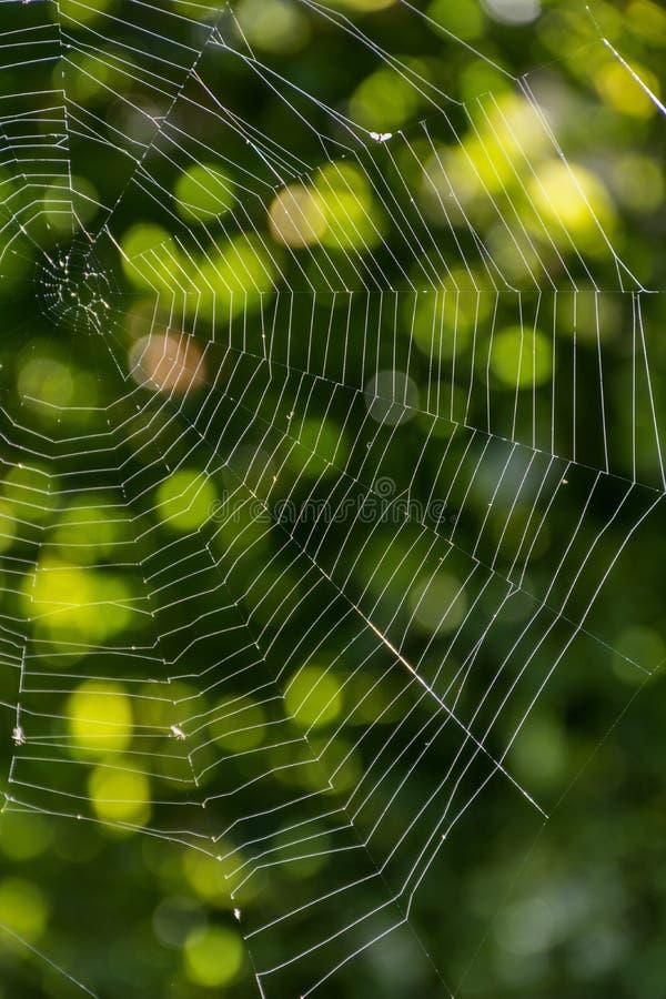 Toile d'araignée dans les rayons du soleil avec le fond naturel vert image stock