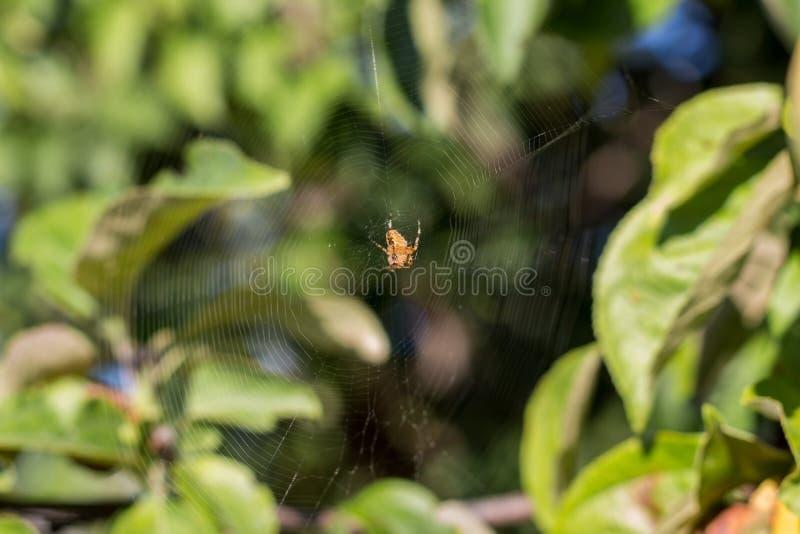 Toile d'araignée de la chasse photographie stock libre de droits