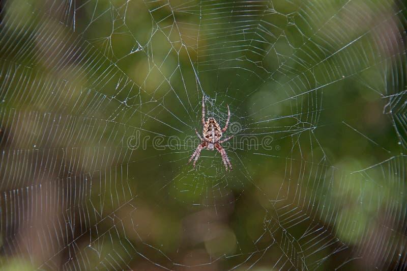 Toile d'araignée de la chasse photo stock