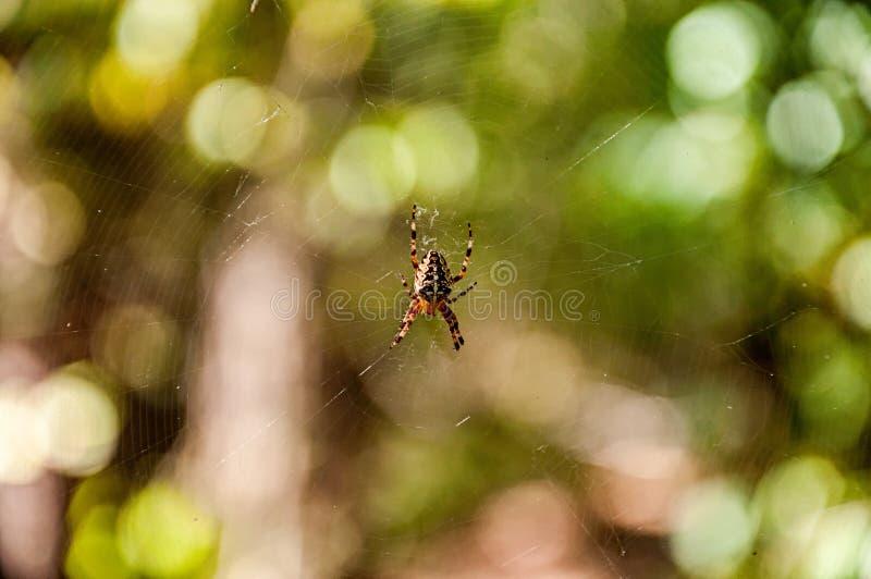 Toile d'araignée de la chasse photos stock