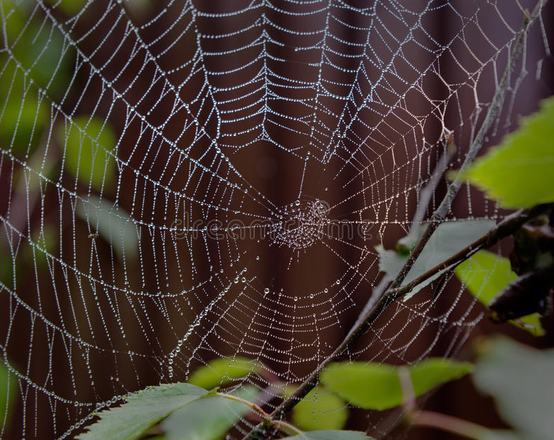 Toile d'araignée de perle image stock